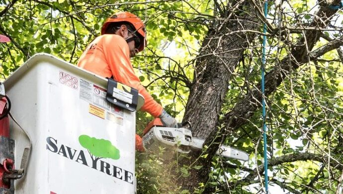 Arborist-Consultations-Savannah Tree Trimming and Stump Grinding Services-We Offer Tree Trimming Services, Tree Removal, Tree Pruning, Tree Cutting, Residential and Commercial Tree Trimming Services, Storm Damage, Emergency Tree Removal, Land Clearing, Tree Companies, Tree Care Service, Stump Grinding, and we're the Best Tree Trimming Company Near You Guaranteed!