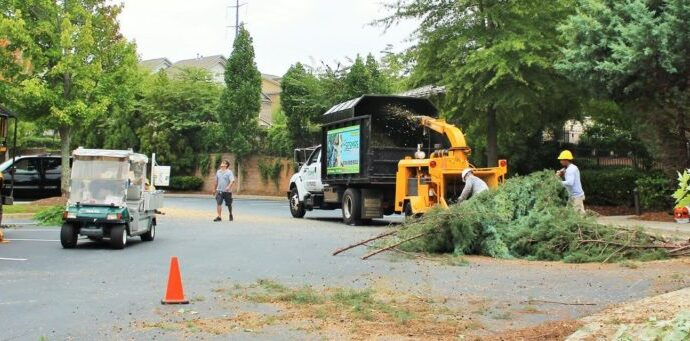 Commercial-Tree-Services-Savannah Tree Trimming and Stump Grinding Services-We Offer Tree Trimming Services, Tree Removal, Tree Pruning, Tree Cutting, Residential and Commercial Tree Trimming Services, Storm Damage, Emergency Tree Removal, Land Clearing, Tree Companies, Tree Care Service, Stump Grinding, and we're the Best Tree Trimming Company Near You Guaranteed!