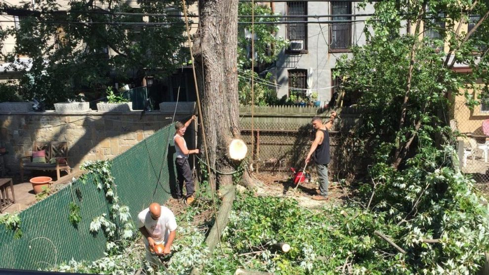 Emergency-Tree-Removal-Savannah Tree Trimming and Stump Grinding Services-We Offer Tree Trimming Services, Tree Removal, Tree Pruning, Tree Cutting, Residential and Commercial Tree Trimming Services, Storm Damage, Emergency Tree Removal, Land Clearing, Tree Companies, Tree Care Service, Stump Grinding, and we're the Best Tree Trimming Company Near You Guaranteed!