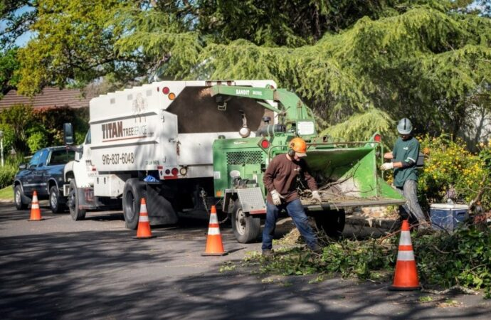 Residential-Tree-Services-Savannah Tree Trimming and Stump Grinding Services-We Offer Tree Trimming Services, Tree Removal, Tree Pruning, Tree Cutting, Residential and Commercial Tree Trimming Services, Storm Damage, Emergency Tree Removal, Land Clearing, Tree Companies, Tree Care Service, Stump Grinding, and we're the Best Tree Trimming Company Near You Guaranteed!