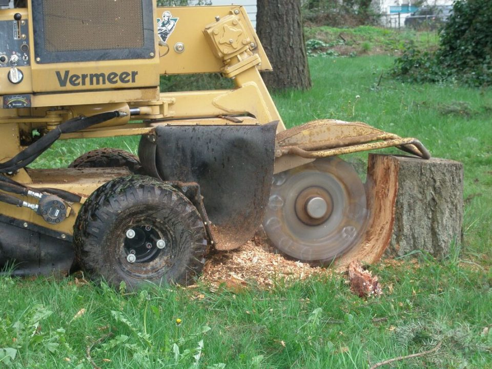 Stump-Grinding-Savannah Tree Trimming and Stump Grinding Services-We Offer Tree Trimming Services, Tree Removal, Tree Pruning, Tree Cutting, Residential and Commercial Tree Trimming Services, Storm Damage, Emergency Tree Removal, Land Clearing, Tree Companies, Tree Care Service, Stump Grinding, and we're the Best Tree Trimming Company Near You Guaranteed!