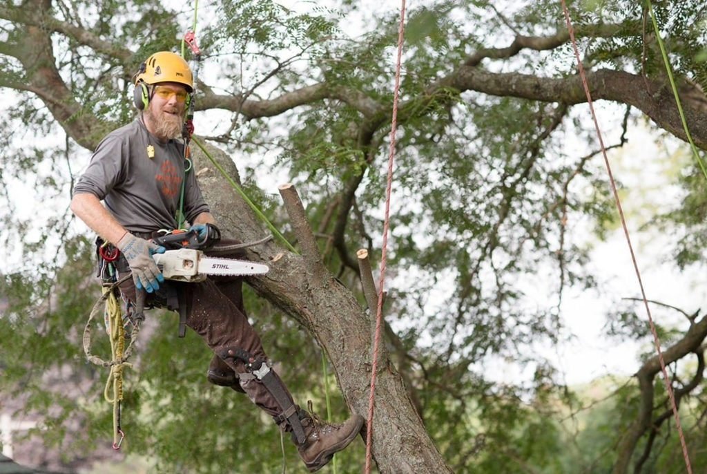 Tree-Cutting-Savannah Tree Trimming and Stump Grinding Services-We Offer Tree Trimming Services, Tree Removal, Tree Pruning, Tree Cutting, Residential and Commercial Tree Trimming Services, Storm Damage, Emergency Tree Removal, Land Clearing, Tree Companies, Tree Care Service, Stump Grinding, and we're the Best Tree Trimming Company Near You Guaranteed!