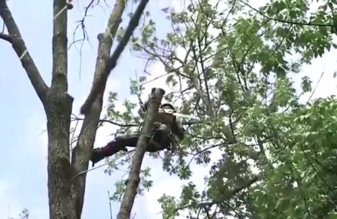 Tree-Removal-Savannah Tree Trimming and Stump Grinding Services-We Offer Tree Trimming Services, Tree Removal, Tree Pruning, Tree Cutting, Residential and Commercial Tree Trimming Services, Storm Damage, Emergency Tree Removal, Land Clearing, Tree Companies, Tree Care Service, Stump Grinding, and we're the Best Tree Trimming Company Near You Guaranteed!