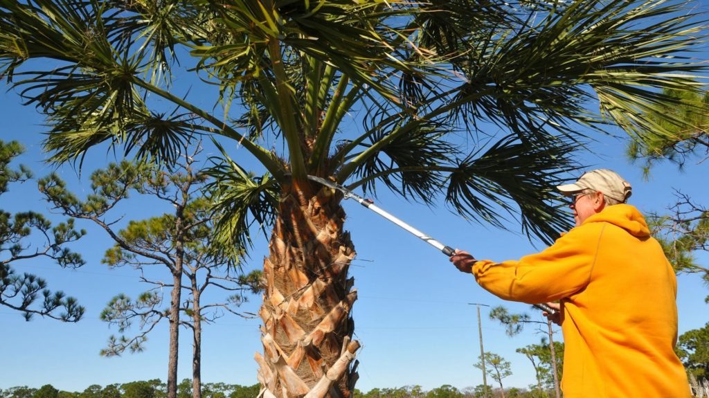 Hardeeville-Savannah Tree Trimming and Stump Grinding Services-We Offer Tree Trimming Services, Tree Removal, Tree Pruning, Tree Cutting, Residential and Commercial Tree Trimming Services, Storm Damage, Emergency Tree Removal, Land Clearing, Tree Companies, Tree Care Service, Stump Grinding, and we're the Best Tree Trimming Company Near You Guaranteed!