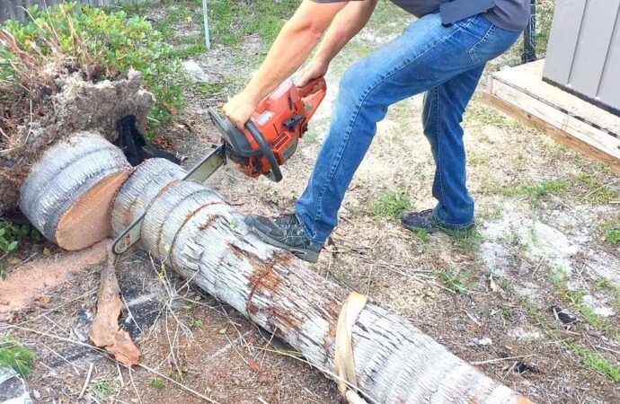 South Newport-Savannah Tree Trimming and Stump Grinding Services-We Offer Tree Trimming Services, Tree Removal, Tree Pruning, Tree Cutting, Residential and Commercial Tree Trimming Services, Storm Damage, Emergency Tree Removal, Land Clearing, Tree Companies, Tree Care Service, Stump Grinding, and we're the Best Tree Trimming Company Near You Guaranteed!