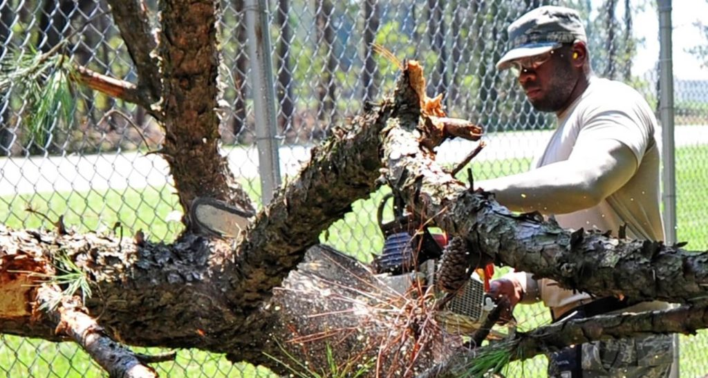Wilmington Island-Savannah Tree Trimming and Stump Grinding Services-We Offer Tree Trimming Services, Tree Removal, Tree Pruning, Tree Cutting, Residential and Commercial Tree Trimming Services, Storm Damage, Emergency Tree Removal, Land Clearing, Tree Companies, Tree Care Service, Stump Grinding, and we're the Best Tree Trimming Company Near You Guaranteed!