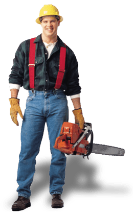 tree-service-man-treecaresavannah